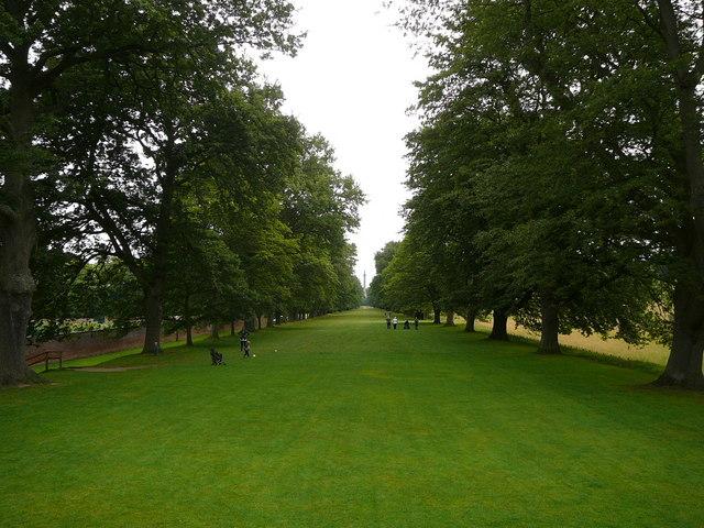 Tree lined avenue, Gibside