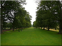 NZ1758 : Tree lined avenue, Gibside by Colin Park