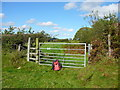 SN1022 : Gate and stile Landsker Borderlands Trail north of Vicar's Mill by Colin Park
