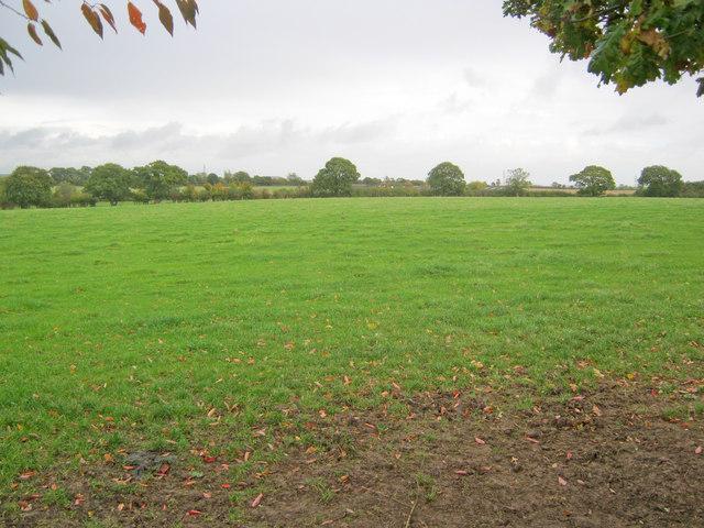 Meadow near Dilliner Wood Farm