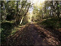 SJ8860 : Bordered by embankments by Jonathan Kington