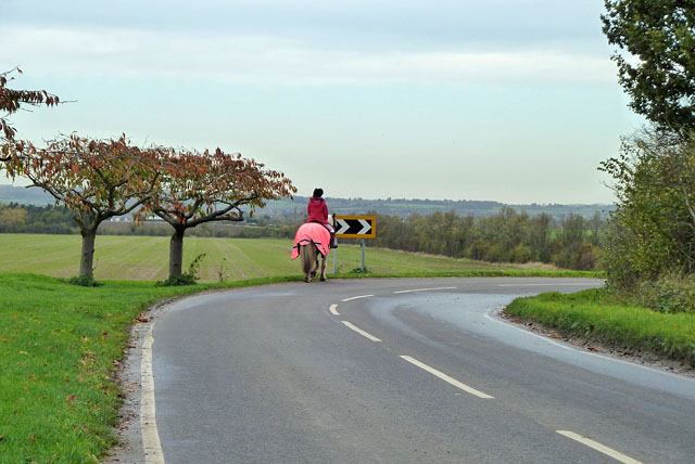 Horse with high-visibility jacket by Robin Webster