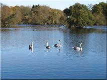 TQ0481 : Little Britain Lake by David Hawgood
