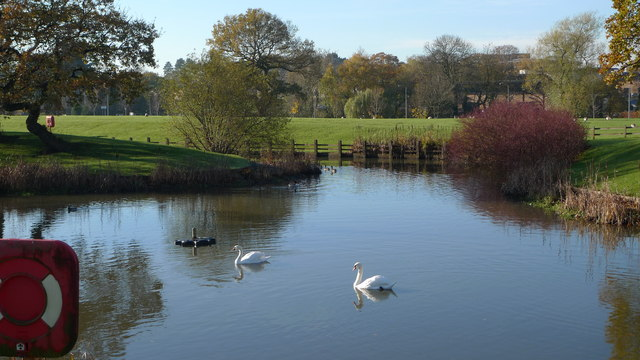 A duck pond, Cheadle Royal Business Park