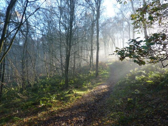 Woodland sunshine