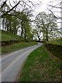 SD5398 : Fir Trees Lane by Alexander P Kapp