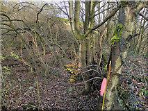 SD7506 : Manchester, Bolton & Bury Canal, Nob End by David Dixon