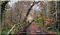 J3369 : The Lagan Meadows walk, Belfast (28) by Albert Bridge