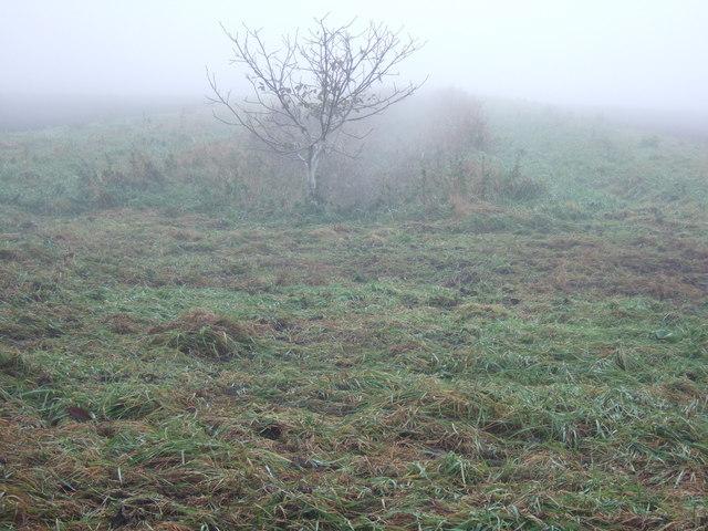 Foggy fenland, Round House Drove, Tick Fen, Chatteris