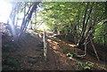 TQ5933 : Steps in Colesgrove Wood by N Chadwick