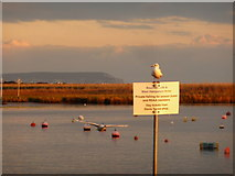 SZ1592 : Christchurch: gull on a sign on the quay by Chris Downer
