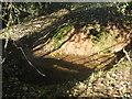 ST6059 : Stream bed in Cinderlands Brake by Dr Duncan Pepper