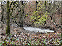 SD7013 : Woodland Pond by David Dixon