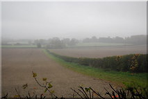 TQ5959 : Hedge leading south from Pilgrims' Way by N Chadwick