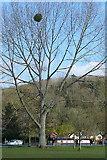 SU7682 : Tree at Marsh Meadows by Graham Horn