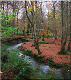 J4681 : Autumn at Crawfordsburn by Rossographer