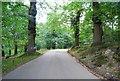 TQ5354 : Driveway into Knole Park by N Chadwick