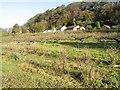 SJ5367 : Winsor's orchard by Jonathan Wilkins