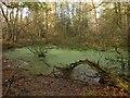SU9485 : Pond, Whitespark Wood by Derek Harper
