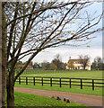 TF6600 : Driveway to Abbey Stud Farm, West Dereham by Evelyn Simak
