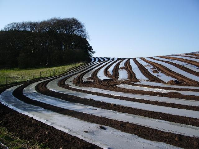 Strip farming near Howend