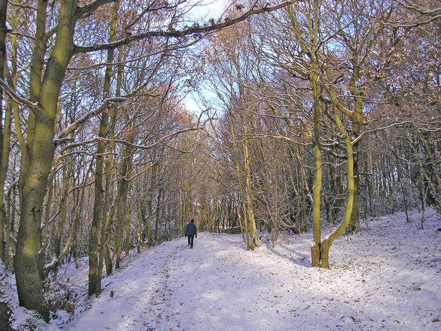 Ravenscliffe Woods in snow