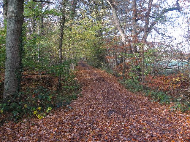 Bridleway past Limekiln Wood