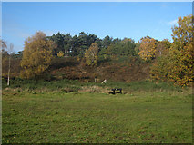TQ1460 : Oxshott Heath by Hugh Venables