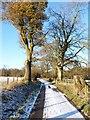 SO3898 : Beech row at Gatten by Richard Law