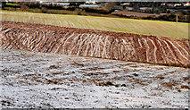 J4774 : Fields, Newtownards (2) by Albert Bridge