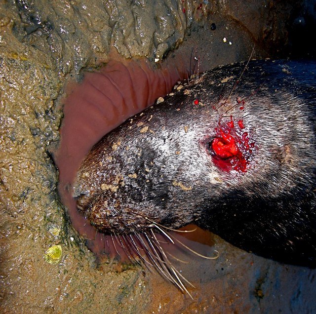 Newburgh: Nature, red in tooth and claw