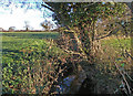 SJ5262 : Waterless Brook near Hoofield by michael ely