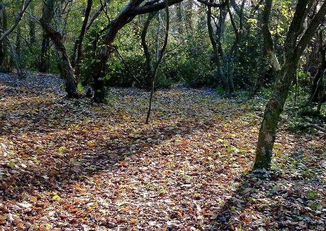 Park Coppice on Colton Hills, Wolverhampton