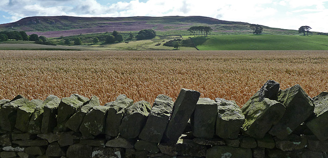 Farmland near Cartington