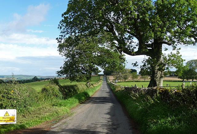 Country road near Cartington (1)