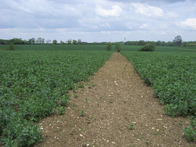 Footpath to Obelisk Farm