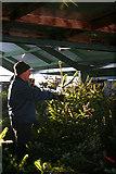 NJ3558 : Preparing for Christmas by Anne Burgess