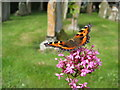 SO4430 : Tortoiseshell butterfly by Philip Halling