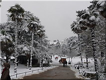 SZ0891 : Bournemouth: palm trees in the snow by Chris Downer