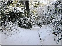 SJ8959 : Wintery scene on the Bateman Walk by Jonathan Kington
