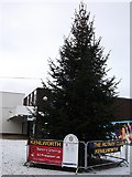 SP2871 : Christmas tree in Talisman Square by John Brightley