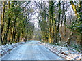 SO5836 : Road through Haugh Wood by Jonathan Billinger