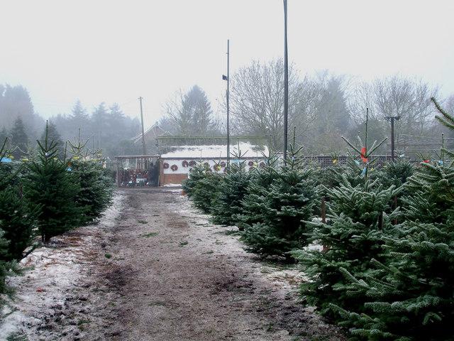 Christmas Tree Farm © Terry Joyce :: Geograph Britain And