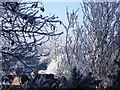 SP2972 : A frosty view from Knowle Hill nature reserve by John Brightley