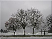 TQ7668 : Trees in Great Lines Heritage Park by David Anstiss
