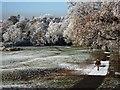SP2872 : Woman walking along frost covered path in Abbey Fields by John Brightley