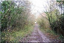 TQ5359 : Steps, North Downs Way by N Chadwick