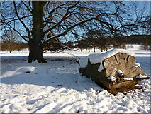 SK2571 : Beech leaves on snow by Peter Barr