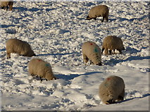 SK2572 : Heads in the snow by Peter Barr