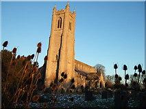 TF5315 : Tower and teasels - Church, Terrington St John by Richard Humphrey